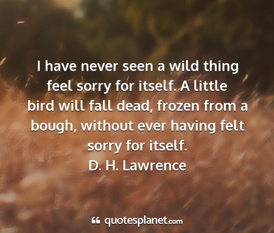 D. h. lawrence - i have never seen a wild thing feel sorry for...